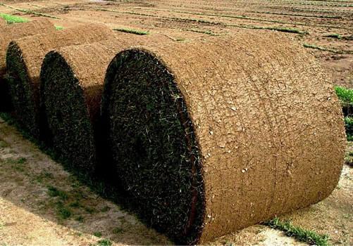 Rollo de tepe grande