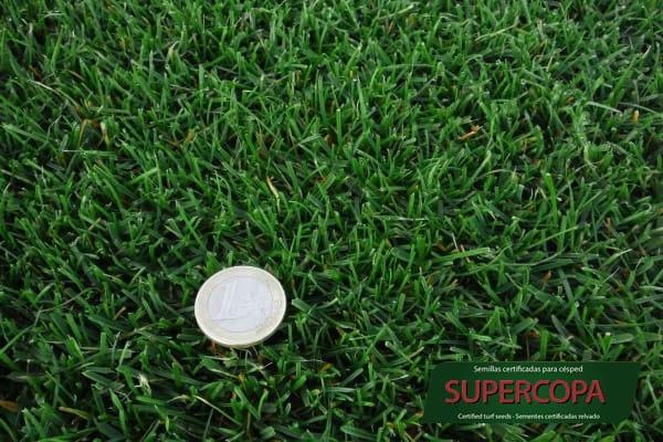 Mezcla de semillas para cesped Supercopa Semillas Zulueta Detalle