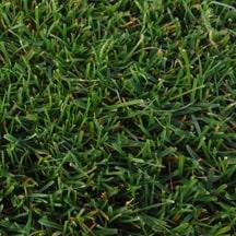 detalle-ray-grass-ingles