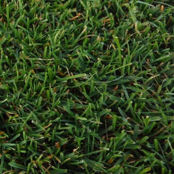 Detalle Ray grass ingles