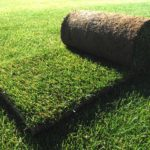 Como plantar tepes de césped. Guía practica.