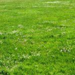 5 pasos para un césped ecológico