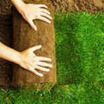 Césped en Tepes. Guía completa de plantación