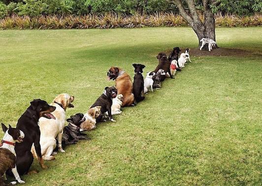 perros-césped