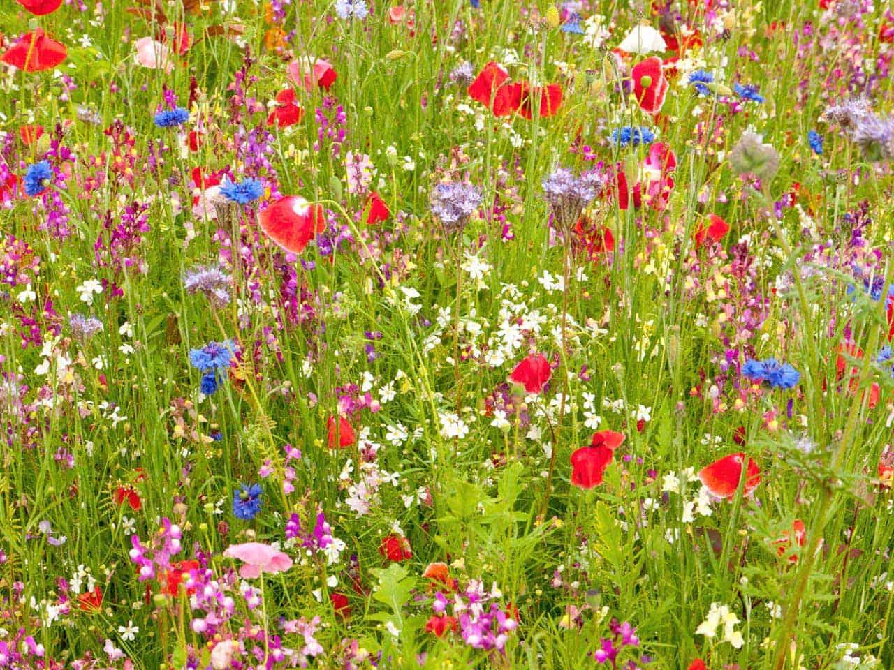 Wildflowers - Zulueta Corporación