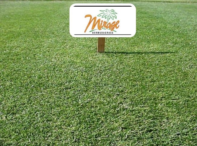 Mirage Bermuda Grass
