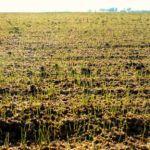 1 millón de m²  de césped sembrado en 24 días