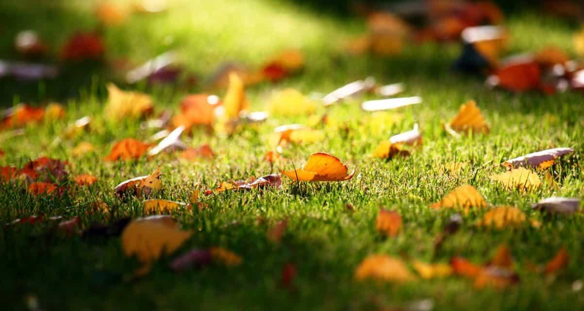 césped-otoño