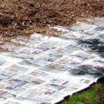 Eliminar el césped viejo con periódicos.